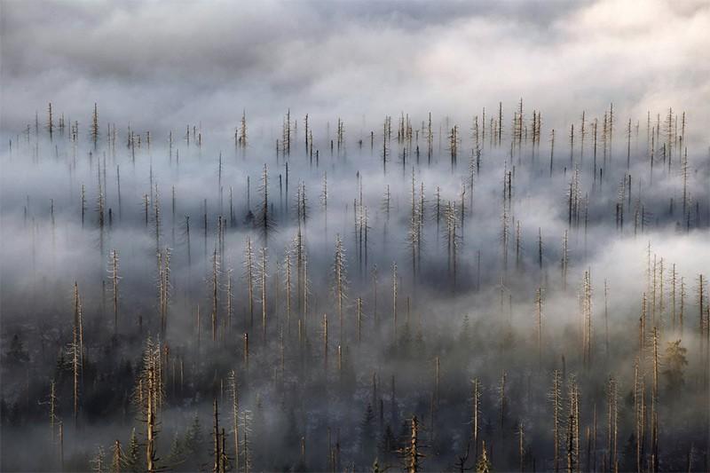 лес норвегии фото