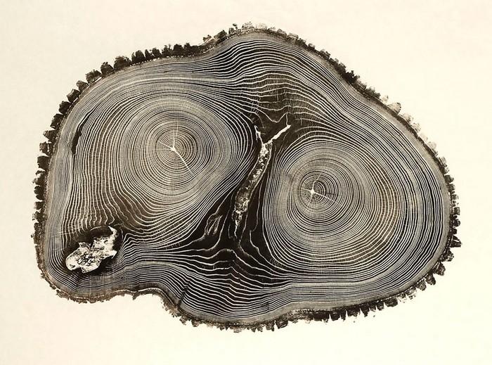 Bryan Nash Gill — древесные «отпечатки пальцев»