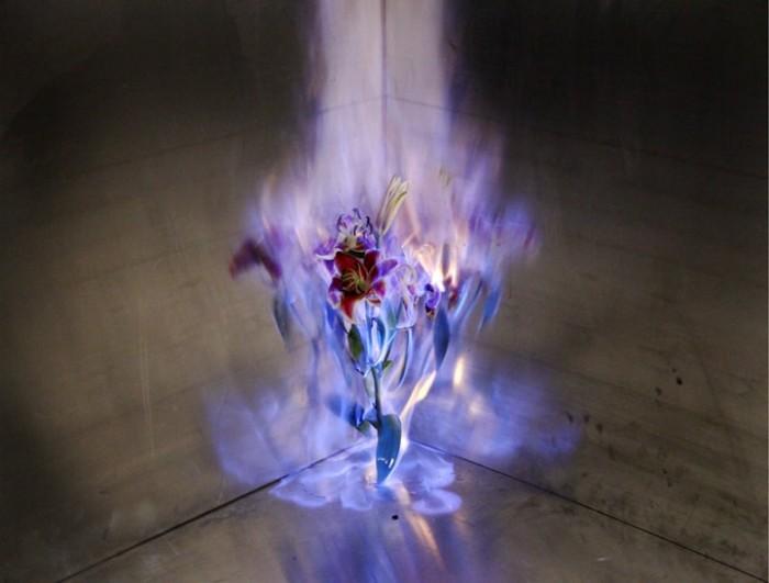 Горящие цветы китайского мастера