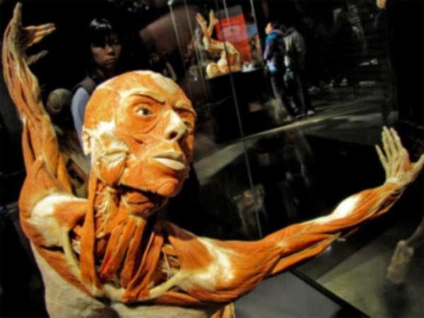 Выставка тело человека. The Human Body Exhibition