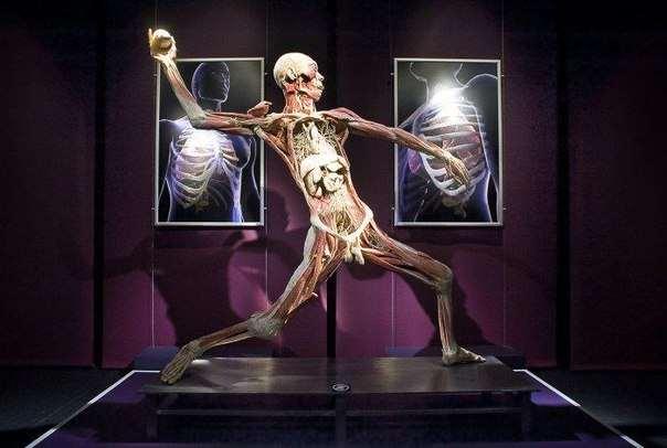 Всемирная выставка, завещающих свои тела науке людей
