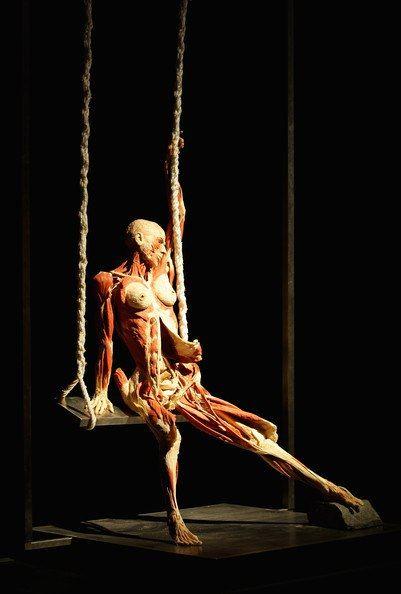 Выставка людских тел