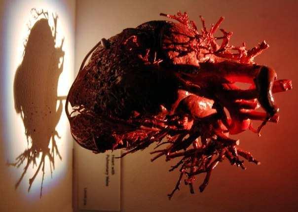 Сердце человека на выставке