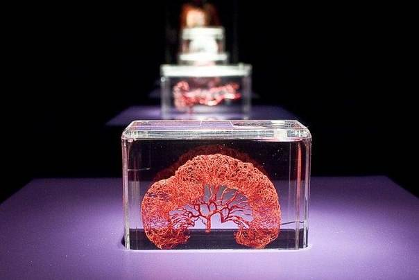 Частица человека, настоящие органы