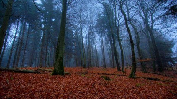 Фотографии леса.