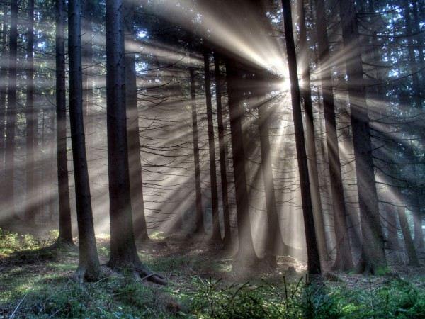 Фотоснимки в лесу.