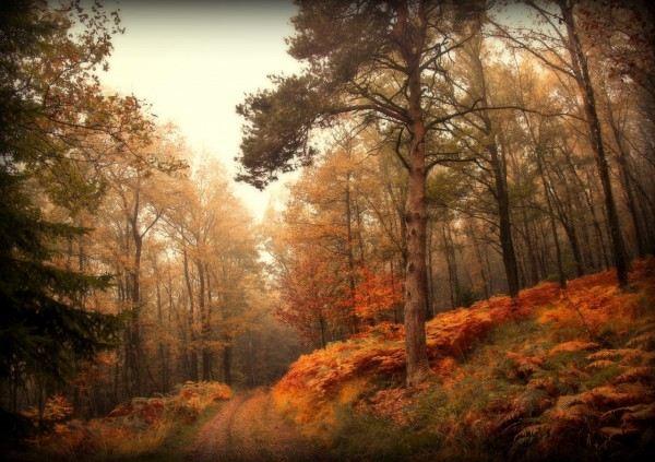 Фотографии природы.