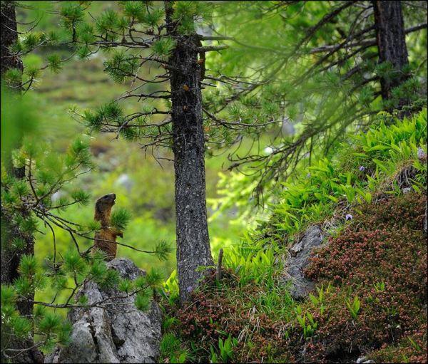 Фотоснимки природы.