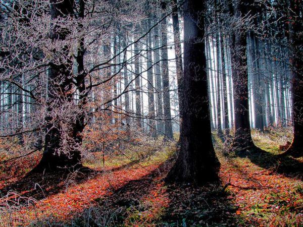 Лесные фотоснимки.