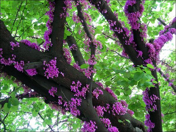Фотография весны.