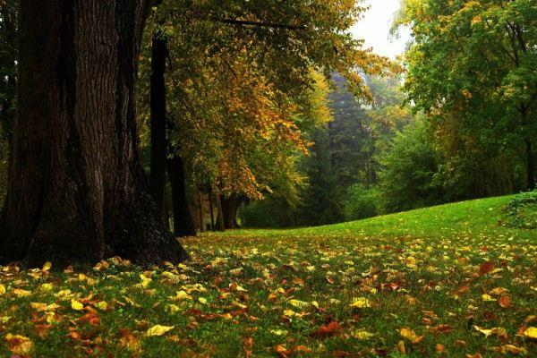 Фото леса.