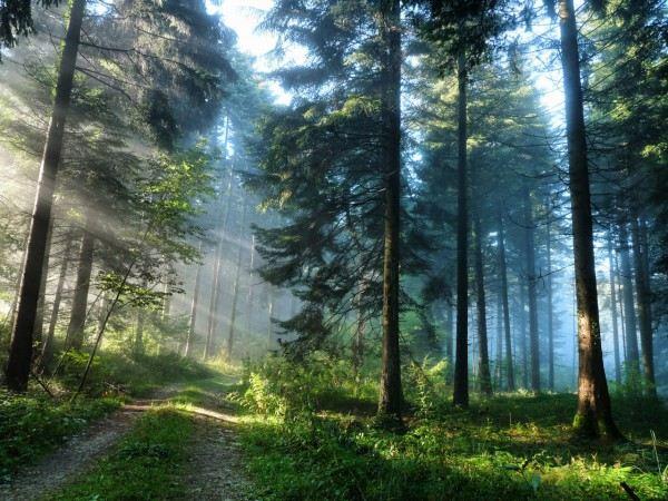 Природа поутру.