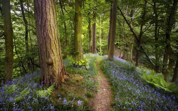 Красивые фотографии леса 50 фото