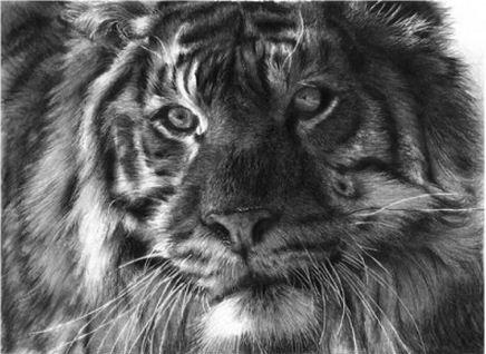 Амурский тигр в исполнении Lisandro Pena.
